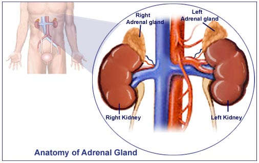 adrenal insufficiency after stopping steroids