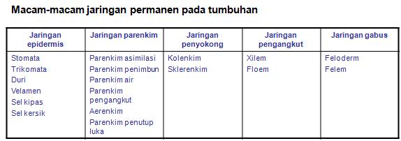Struktur Dan Fungsi Jaringan Tumbuhan Javaurora